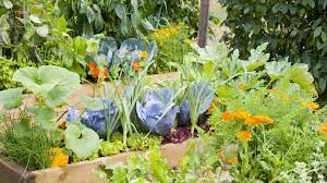Gardening With Physical Limitations
